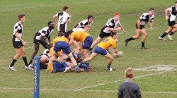 Ashgrove on the attack.
