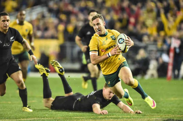 nic white try wallabies