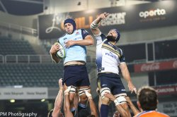 Will the Waratahs snatch a victory this weekend over their chimaera?